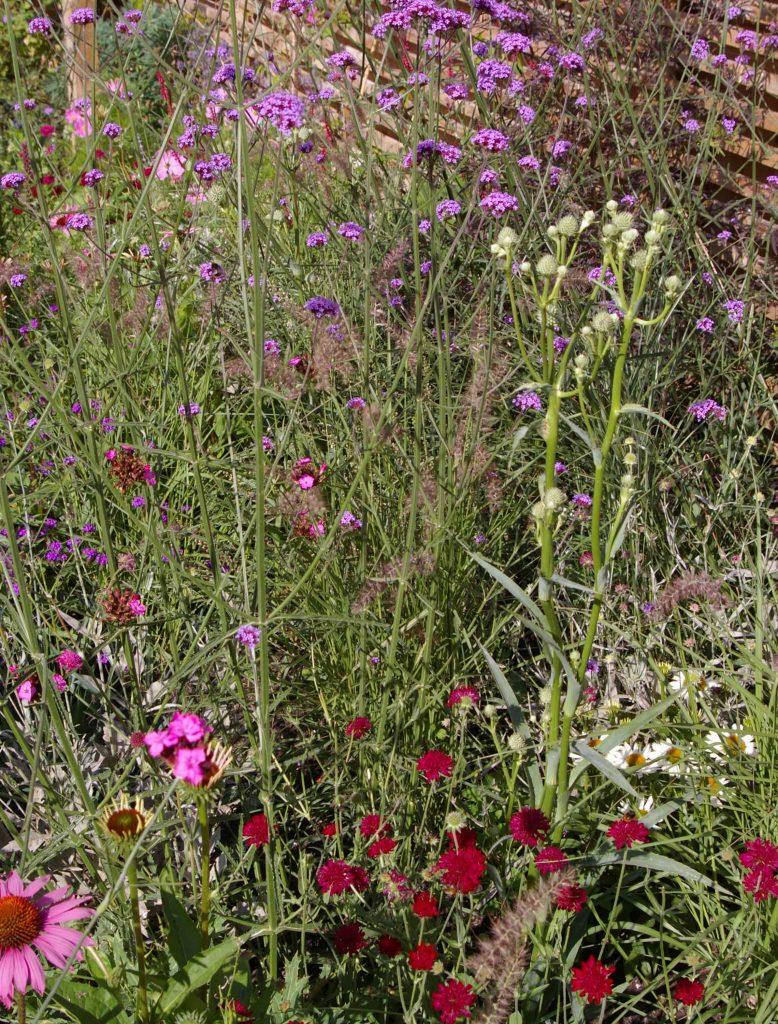 Plants in the Wildlife Garden