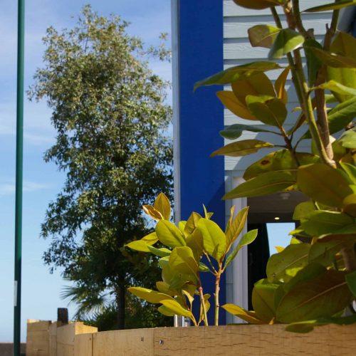 Mobile 4 Specimen Trees